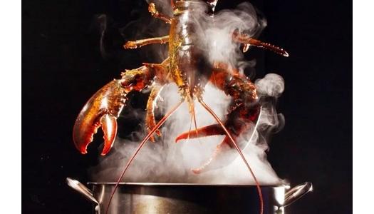 在这些国家,煮龙虾、炖鱼操作不当可能会违法...