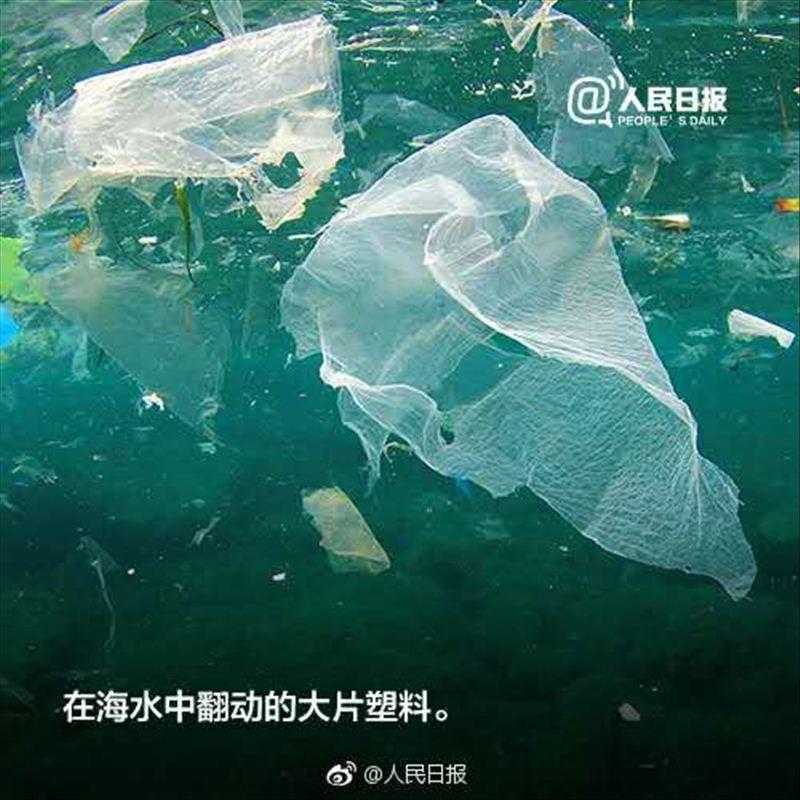 世界海洋日|它们那么美,怎么忍心伤害?
