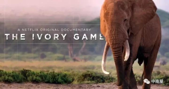 黄泓翔:当我们在说非洲野生动物保护的时候,我们在说什么?